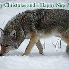 Coyote Christmas by starbucksgirl26