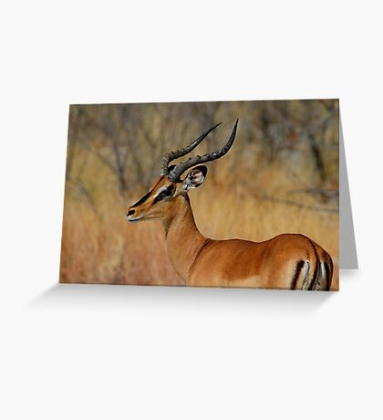 Black-faced Impala Greeting Card