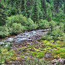 Canyon Creek 2 by rocamiadesign
