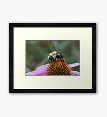 Pretty in Pollen Framed Print