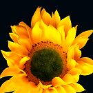Sunflower Joy And Inspiration by hurmerinta