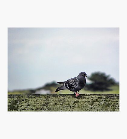 Perfect Peace Photographic Print