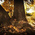 Cottonwood Fall by KatsEyePhoto