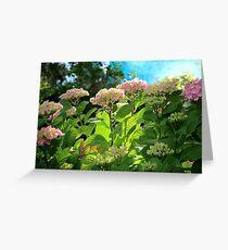 Hydrangea Morning Greeting Card