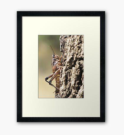 Plains Lubber Grasshopper ~ Female Framed Print