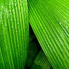 Layered Leaves by David Mellor