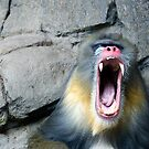 Melbourne Zoo #2 by Chris Muscat