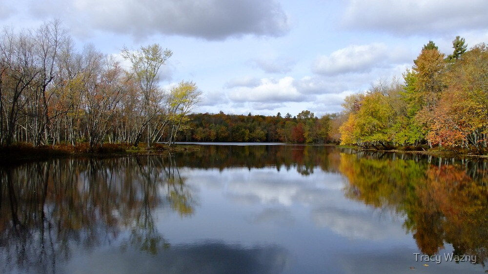 Eels Creek, Oct 2 2010 by Tracy Wazny