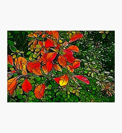 Autumn - Red Leaves Photographic Print