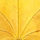 Autumn Leaf by Catherine Hadler