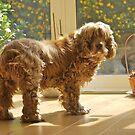 Daisy in the sun by amulya