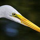 Portrait of an Egret by Alison M