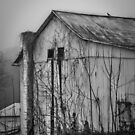 """The Bird"" by Mary Fox"