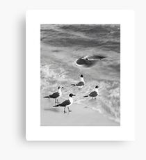 Siesta Key Birds  Canvas Print