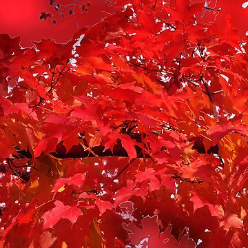 Variations of RED by digiphotos
