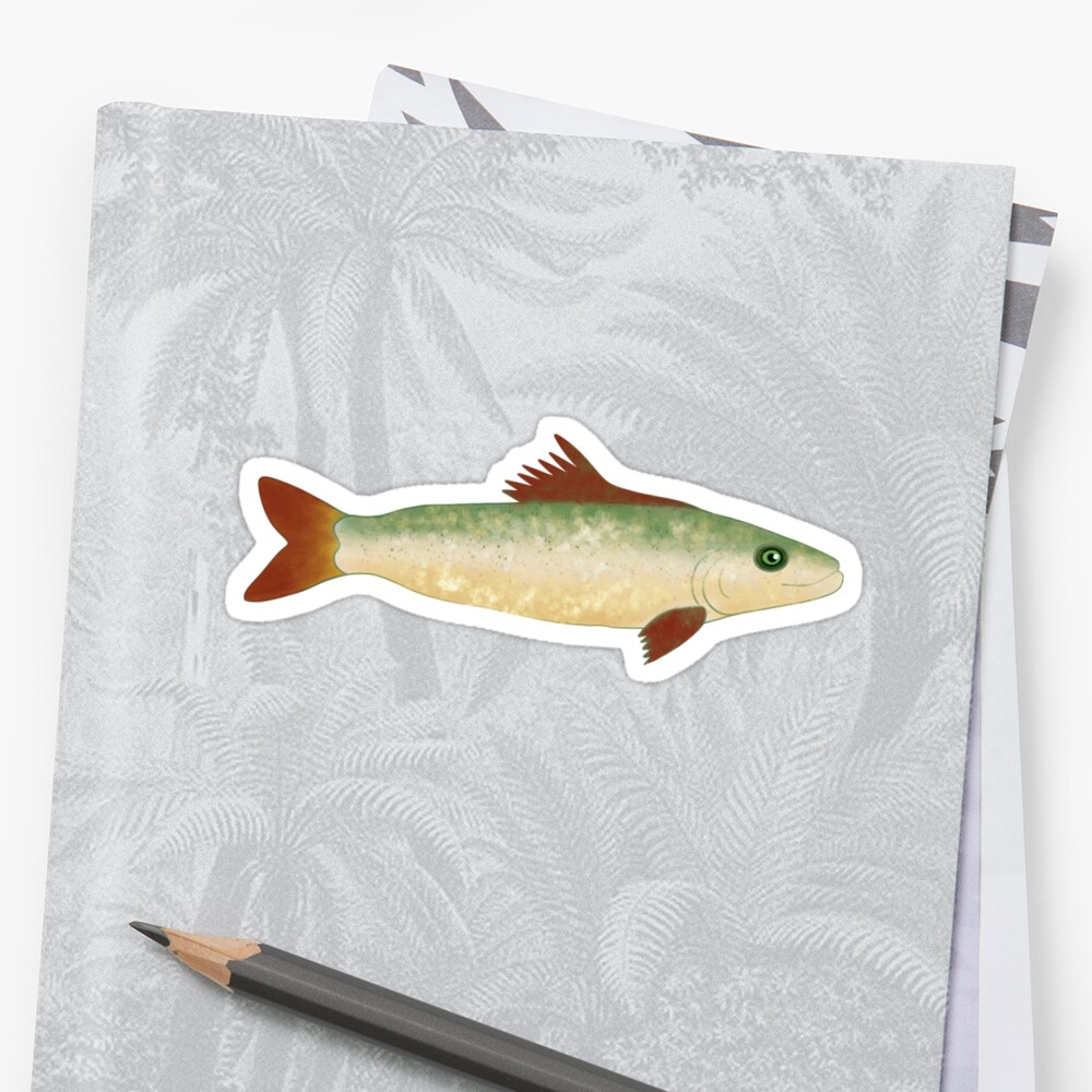 Trout Fish Illustration  Sticker