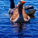 goose - what? by james smith