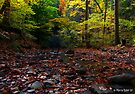 Autumn Creek by Marcia Rubin