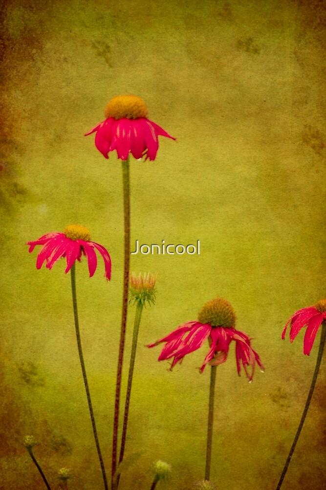 Coneflowers by Jonicool