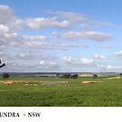 Spring at Cootamundra #2 by Rosalie Dale