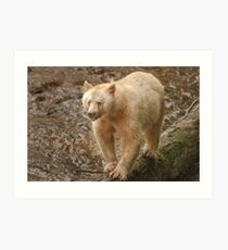Spirit bear raspberry Art Print
