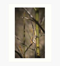unknown hopper with appendage Art Print