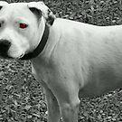 Lily Devil Dog by chrisuk
