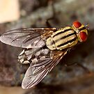 Flyblown by Shelley Heath
