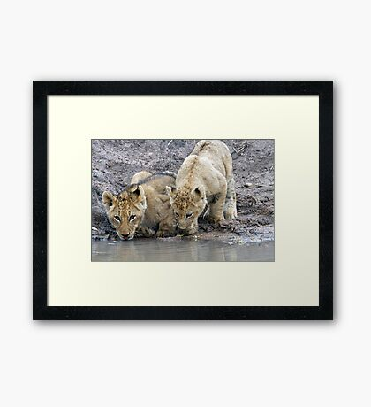 Drinking With A Friend Framed Print