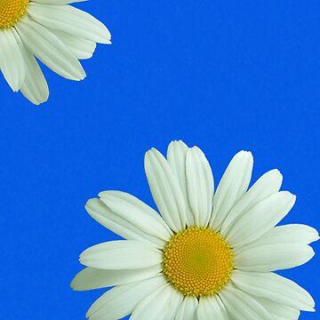 Daisy by dizzyg