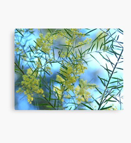Spring Wattle,Quensland Australia Canvas Print