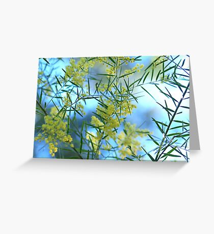 Spring Wattle,Quensland Australia Greeting Card