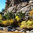In The Canyon by Barb Miller