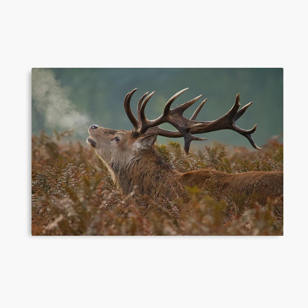 Red Deer Stag Canvas Print