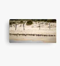 Shorebird Landscape Canvas Print