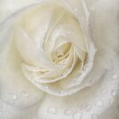 Flüstern von Weiß von Celeste Mookherjee