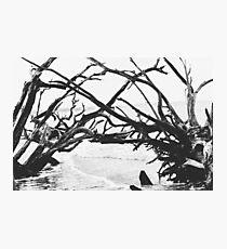 Adrift and Reaching Photo Photographic Print