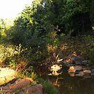 Forest View by ravishankar82
