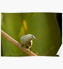 Am Bird! Poster
