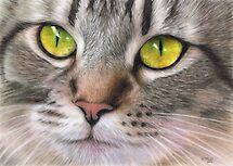 Amber Eyes by Karen  Hull