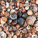 Study of a Tasmanian beach by tasadam