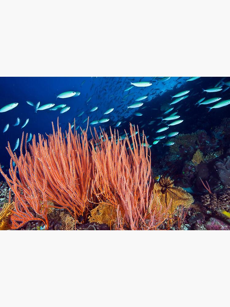 Wheeler Reef garden by DavidWachenfeld