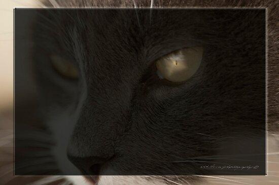 He Sees All © Vicki Ferrari by Vicki Ferrari
