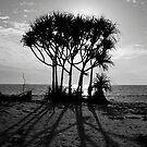 Pandanus - Kowanyama by Felicity Hayward