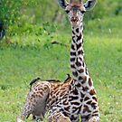 Mr Inquisitive & Friends, Tarangire National Park, Tanzania by Adrian Paul