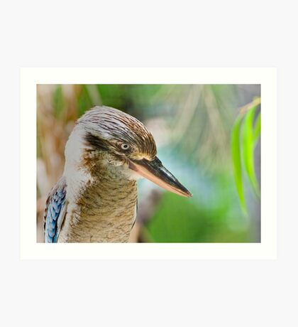 Blue winged kookaburra  Art Print