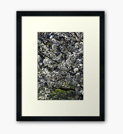 Spring Display Framed Print