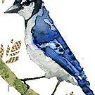 Cyanocitta  Cristata #2 (Blue Jay #2) by Carol Kroll