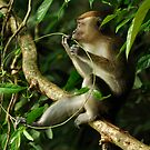 monkey by T.O. Ang