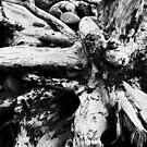Starburst Stump by arawak